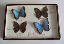 Boîte aux papillons - AVANT