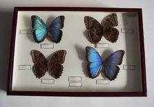 Boîte aux papillons - APRES